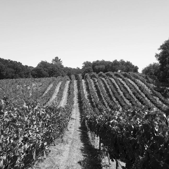 Russell Ranch Vineyard